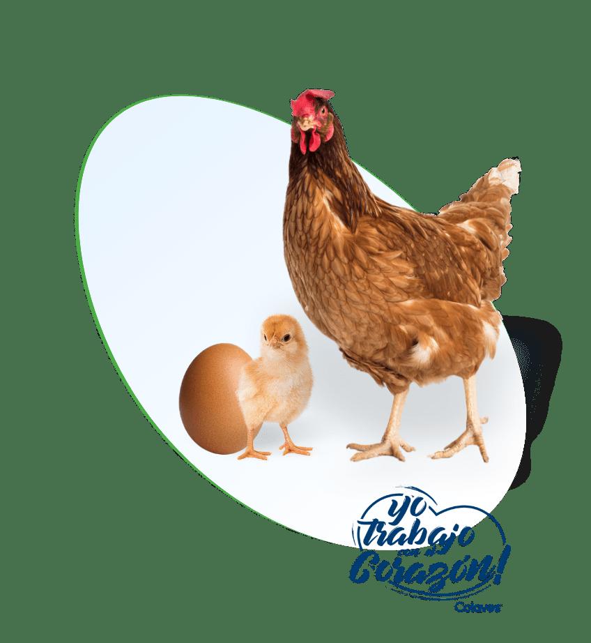 Somos la genética avícola más productiva de Colombia