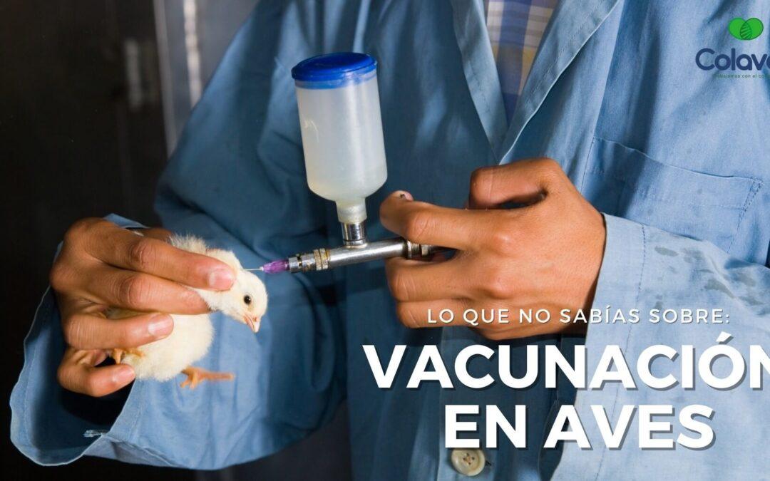 ➤ Las Cosas que NO sabías sobre la Vacunación en Aves