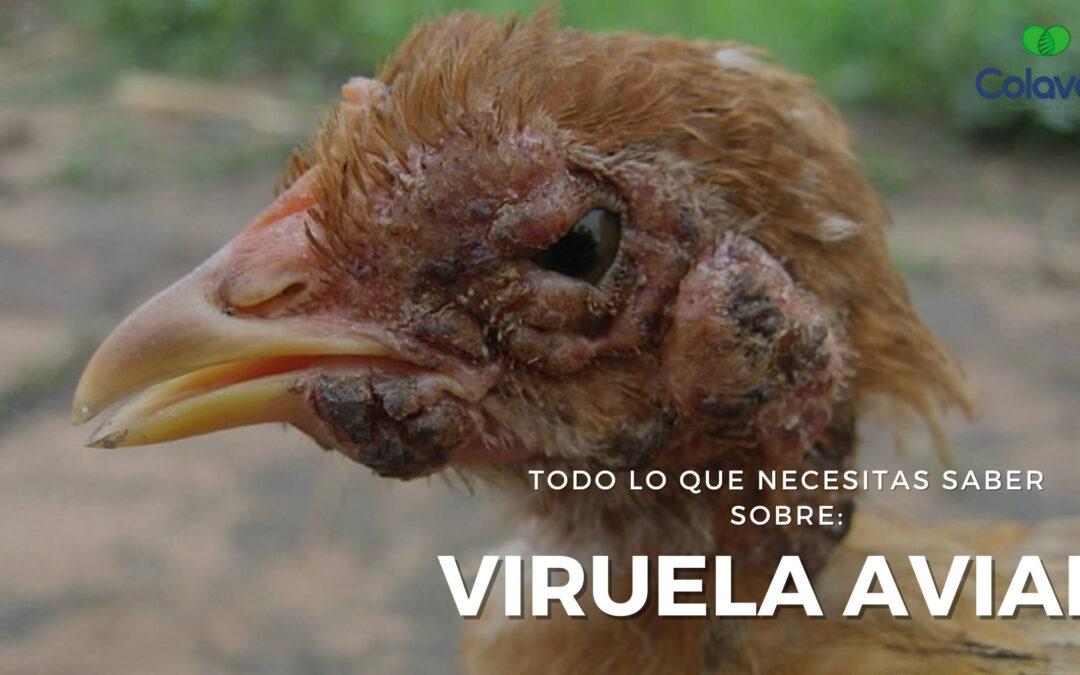 ➤ Todo sobre la Viruela Aviar en Aves de Corral [Diagnóstico y Tratamiento]