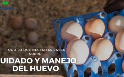 ➤ Importancia, Cuidado y Manejo de los Huevos en Granjas