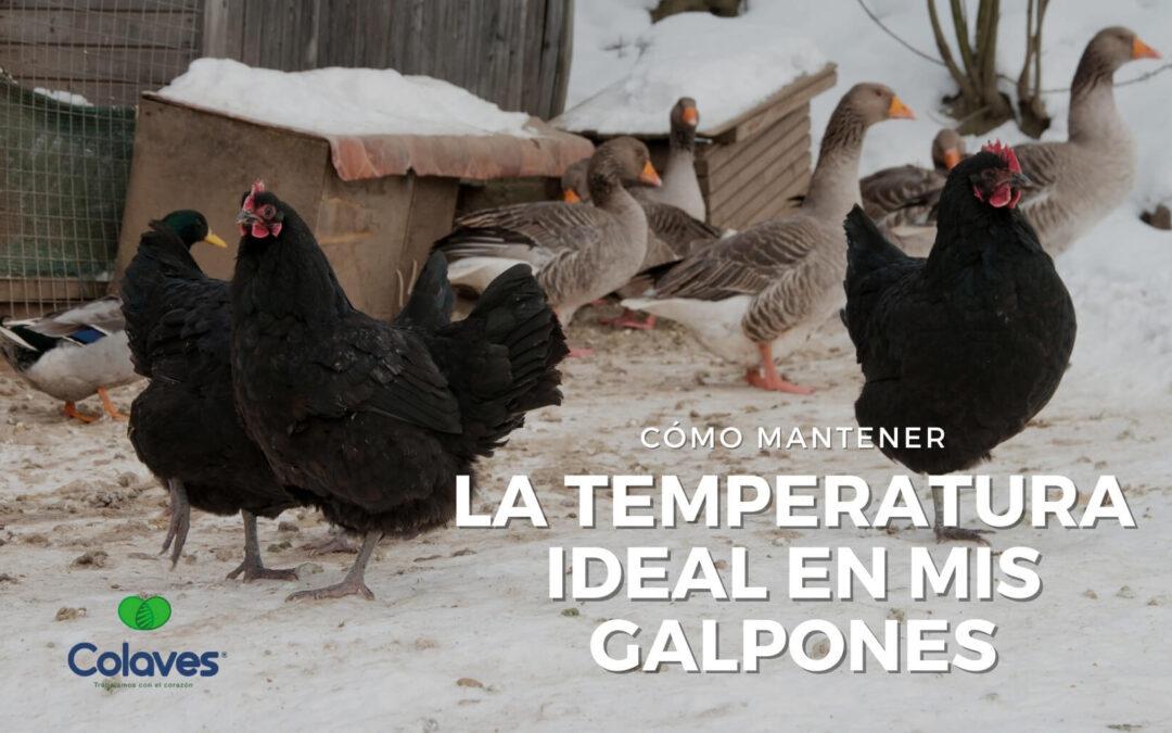 ➤ ¿Cómo Mantener la Temperatura Ideal en mis Galpones?